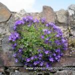 plants for a memorial garden