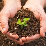 How to test the soil in your garden